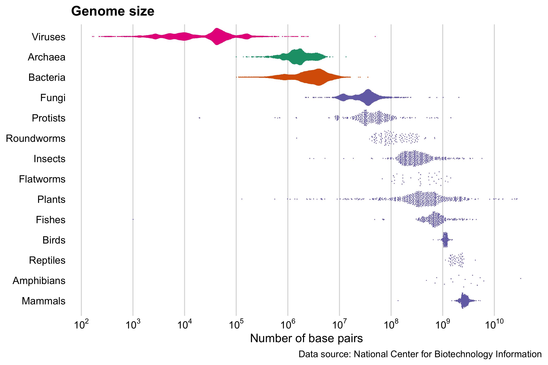 Genome size